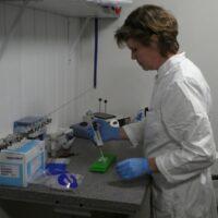 DNA-Kønsbestemmelse/ DNA-kønstest på fugle